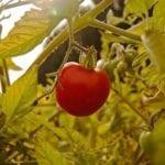 Easy Pickin's Veggie Picking! - 2Teaspoons